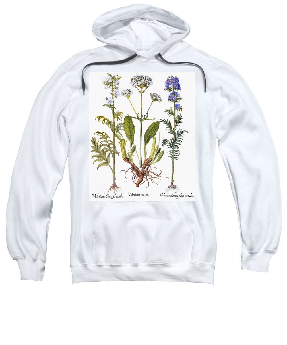1613 Sweatshirt featuring the photograph Valerian Flowers, 1613 by Granger