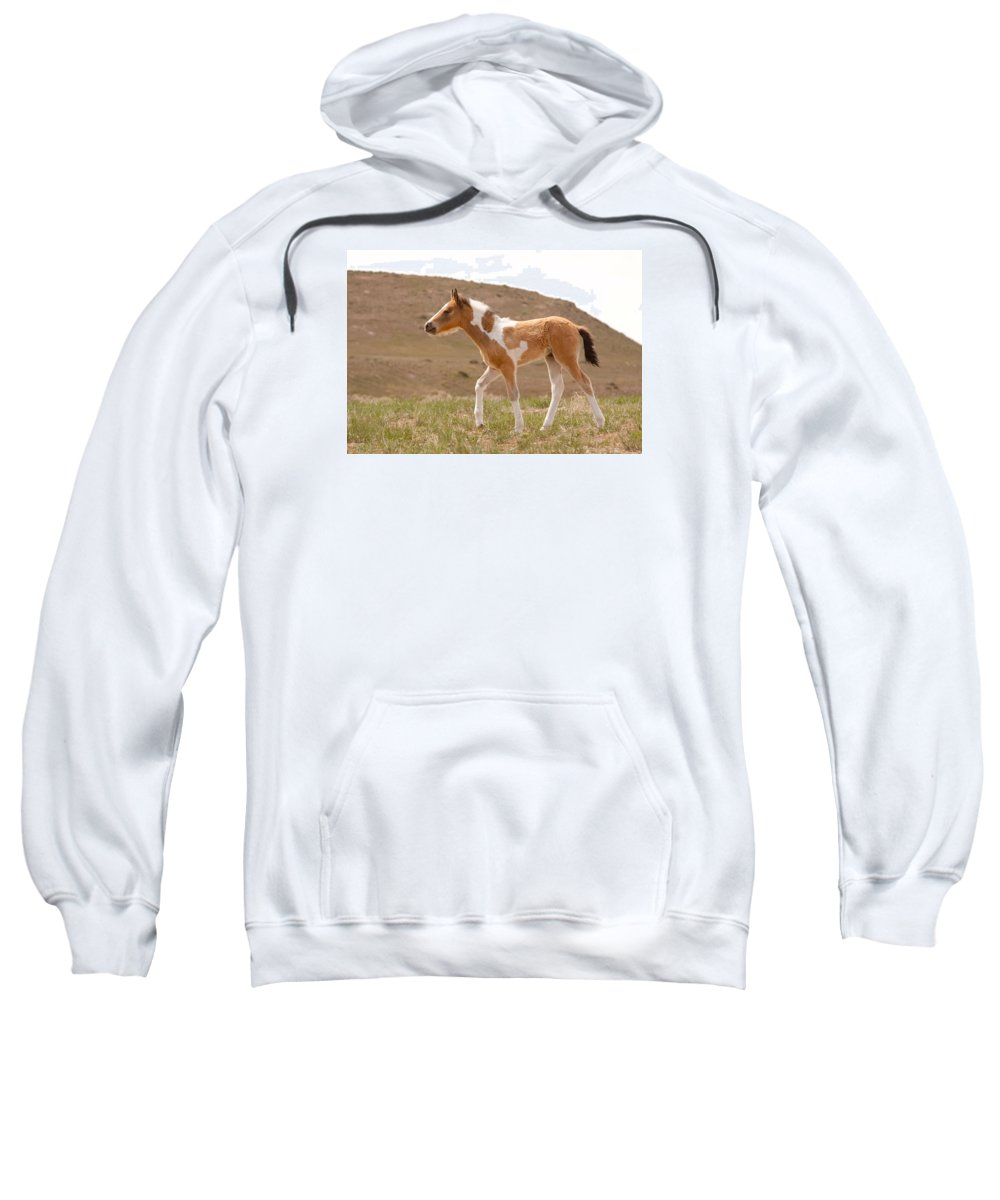 Wild Horse Sweatshirt featuring the photograph Wait Up Mom by Kent Keller
