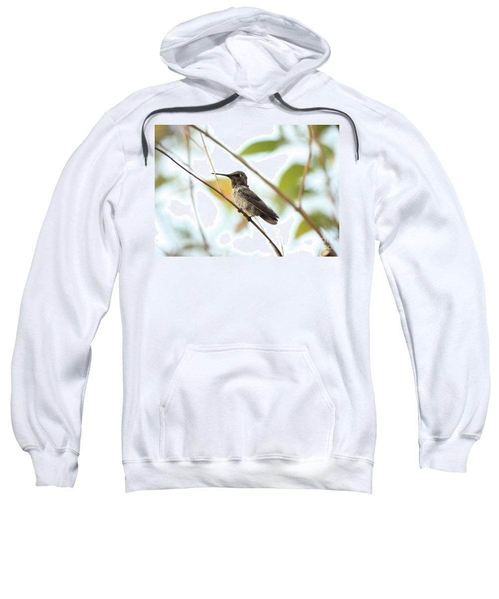Hummingbird Sweatshirt featuring the photograph Watchful Hummingbird by Carol Groenen