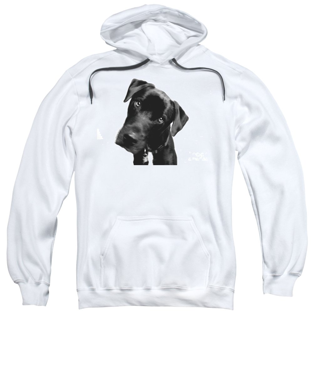Labrador Sweatshirt featuring the photograph What by Amanda Barcon