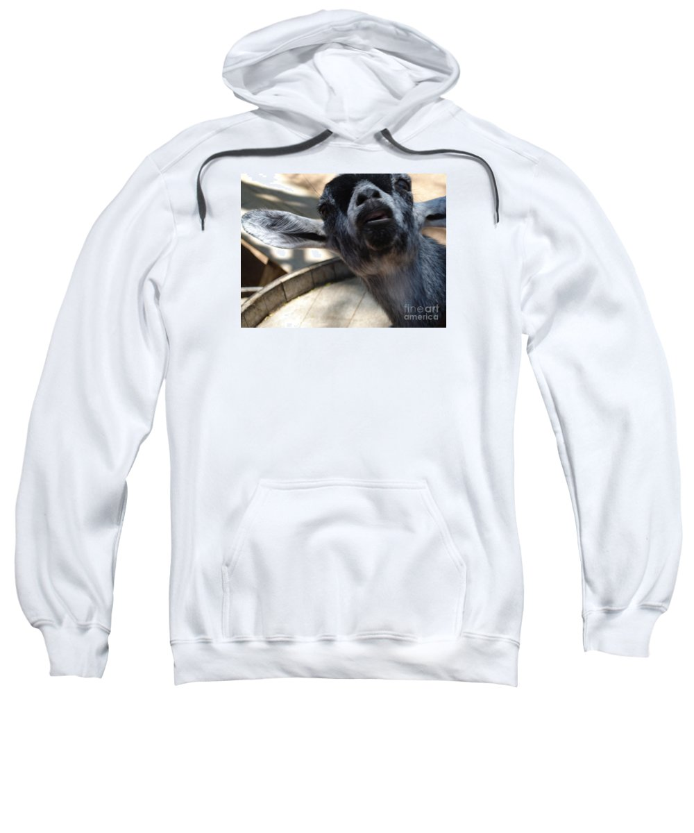 Goat Sweatshirt featuring the photograph What's Up by Madilyn Fox