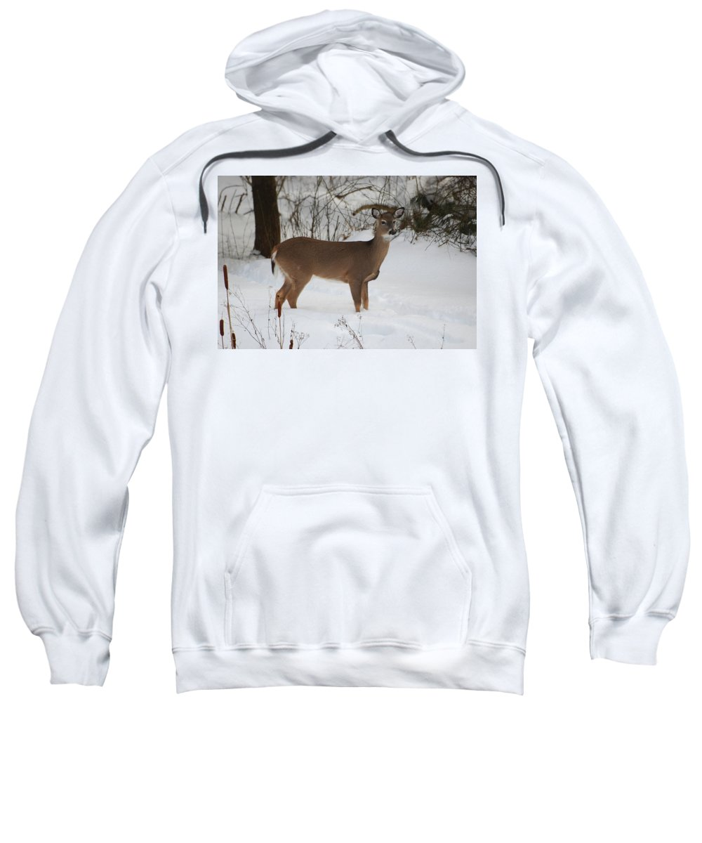 Deer Sweatshirt featuring the photograph Where Is Everybody by Lori Tambakis