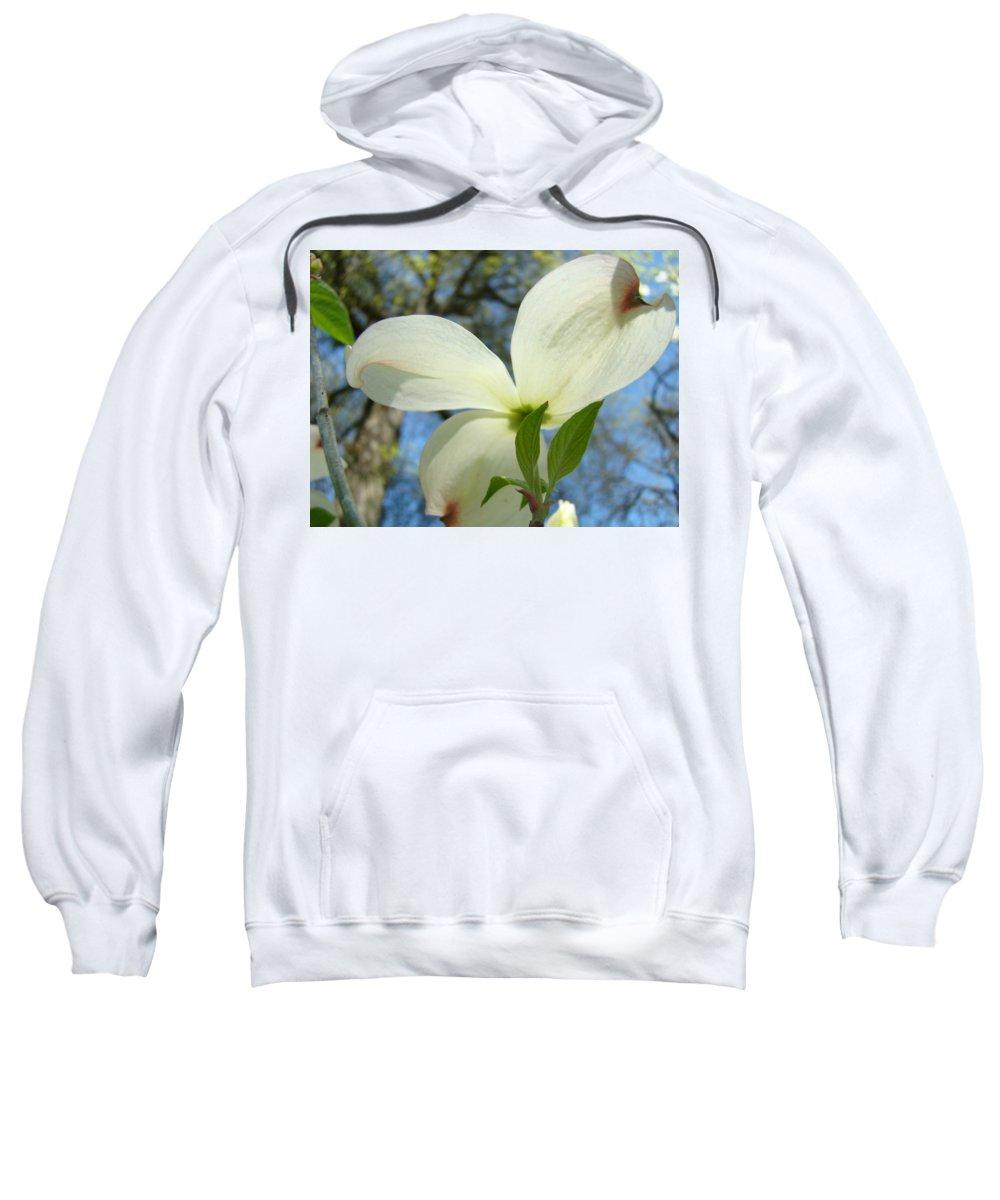 Giclee Art Print Sweatshirt featuring the photograph White Dogwood Flower Art Prints Blue Sky Baslee Troutman by Baslee Troutman