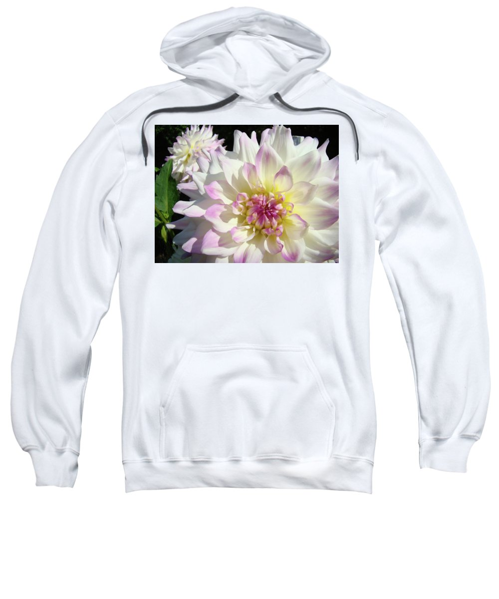 Flowers Sweatshirt featuring the photograph White Floral Art Bright Dahlia Flowers Baslee Troutman by Baslee Troutman
