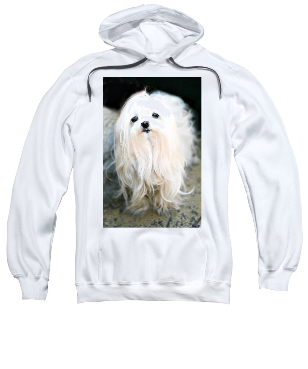 Small Sweatshirt featuring the photograph White Fluff by Marilyn Hunt