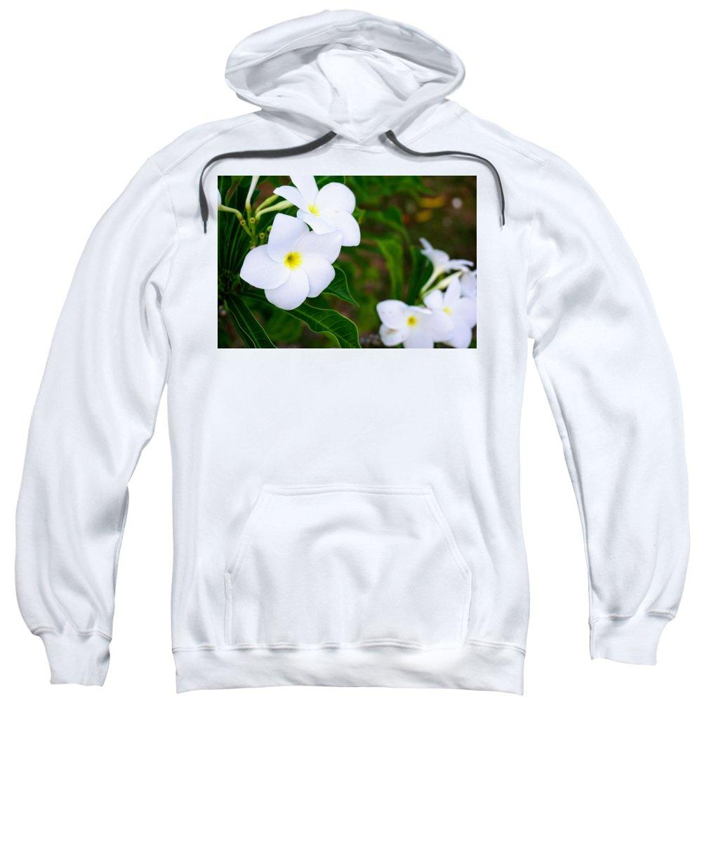 Plumeria Sweatshirt featuring the photograph White Plumeria by Jade Phoenix