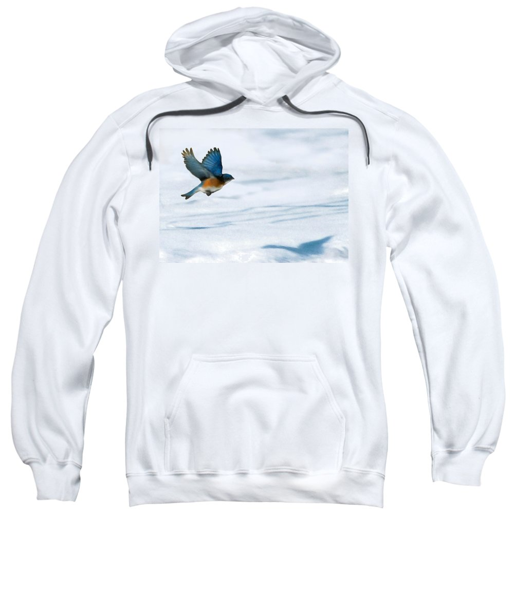 Blue Bird Sweatshirt featuring the digital art Winter Blues by Steve Karol