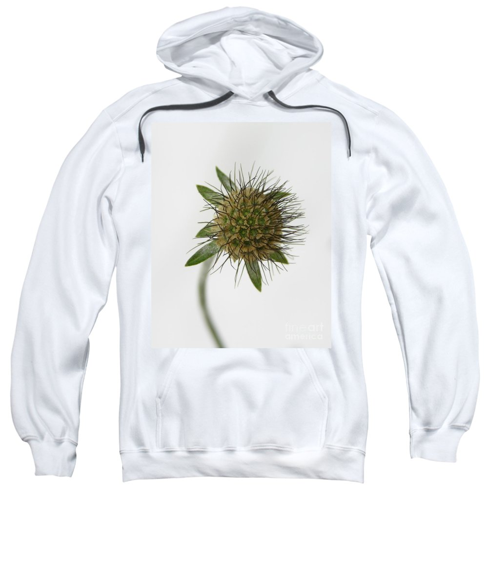 Nature Sweatshirt featuring the photograph Winter Pin Cushion Plant by Carol Groenen