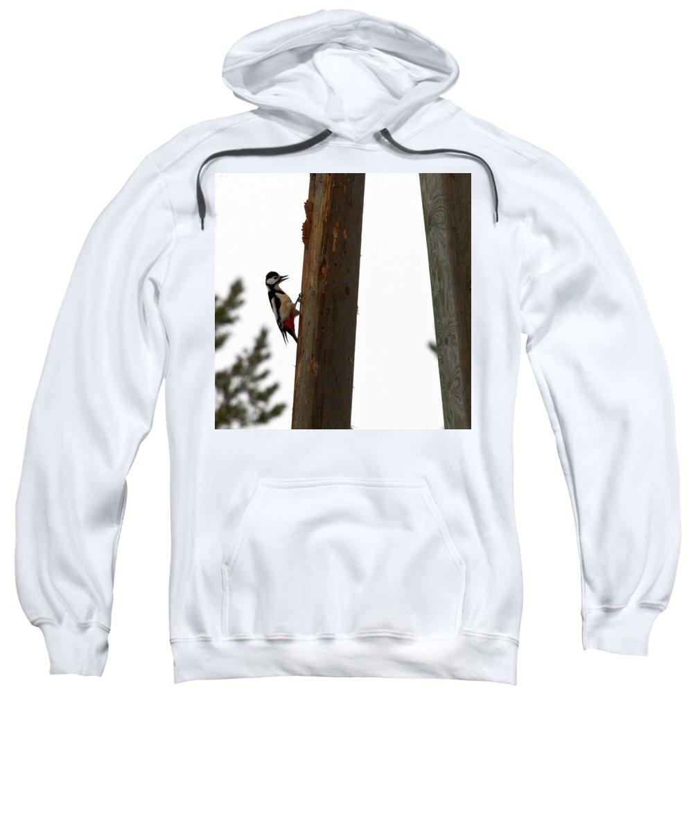 Lehtokukka Sweatshirt featuring the photograph Woodpecker Workshop by Jouko Lehto