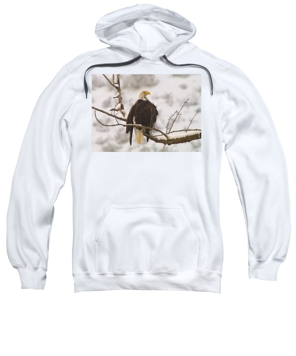 Eagles Sweatshirt featuring the photograph Yakama Canyon Eagle by Jeff Swan