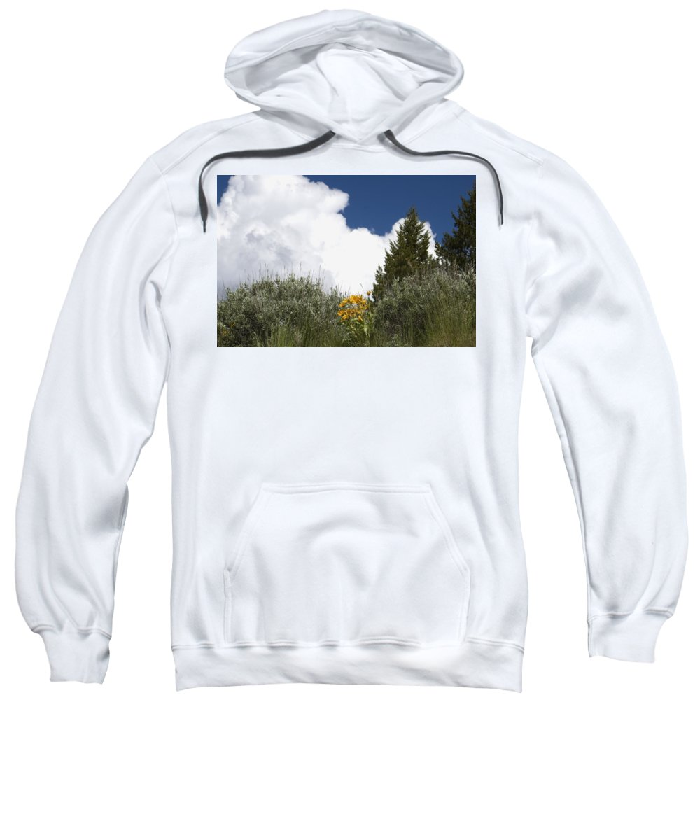 Clouds Sweatshirt featuring the photograph Yellow Flowers White Cloud by Sara Stevenson