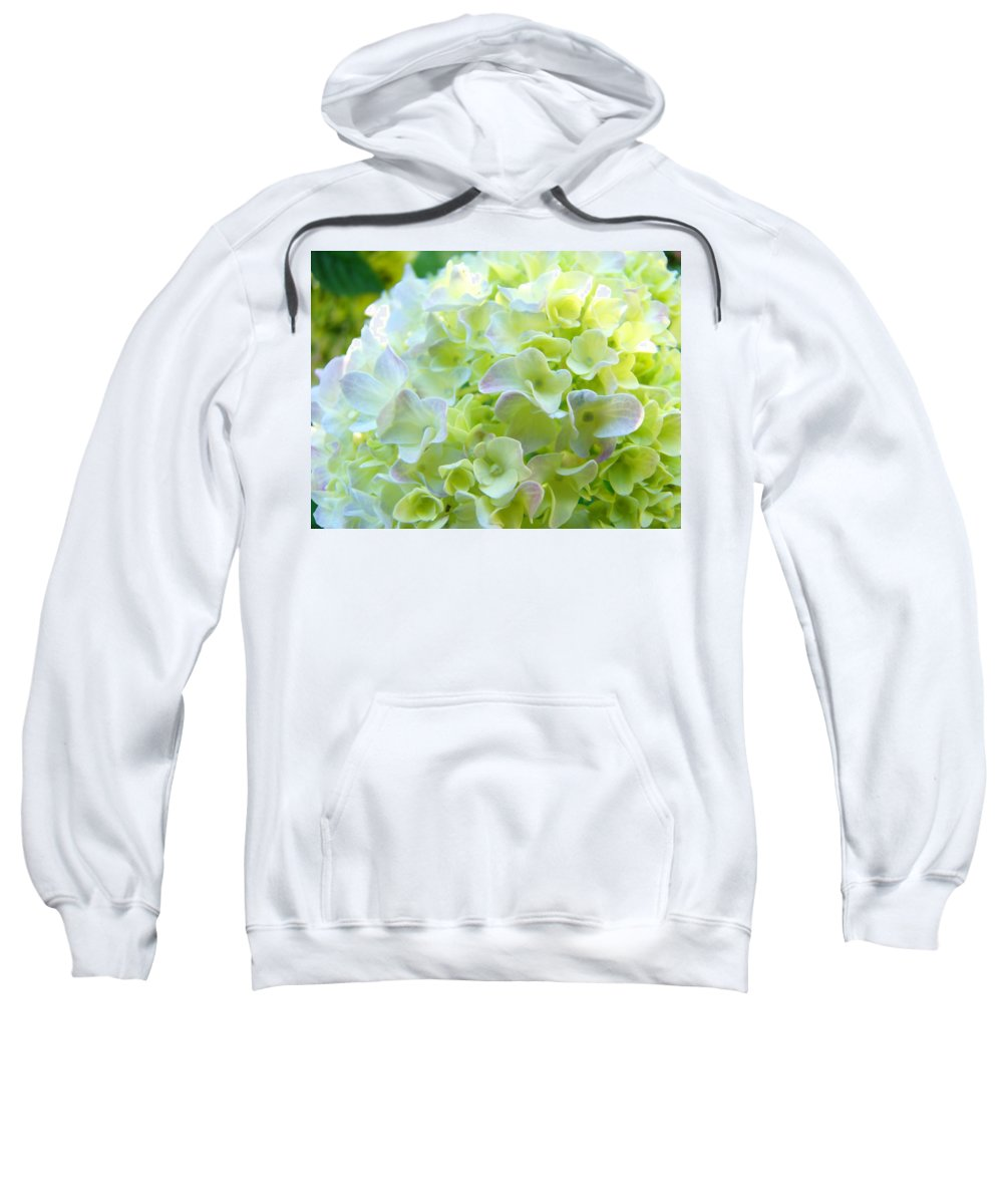 Bright Sweatshirt featuring the photograph Yellow Hydrangea Flowers Art Prints Baslee Troutman by Baslee Troutman
