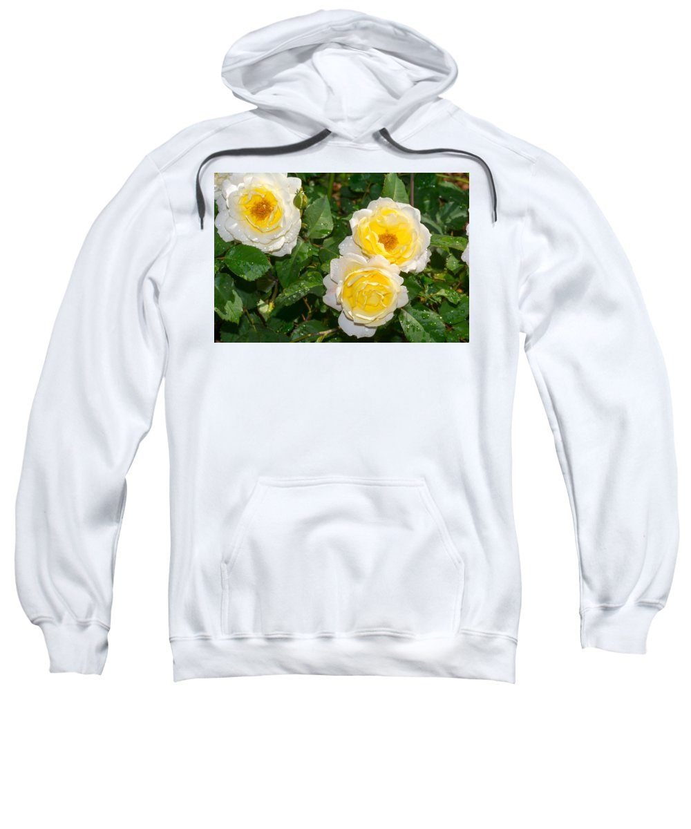 Yellow Sweatshirt featuring the photograph Yellow Roses by Royal Tyler