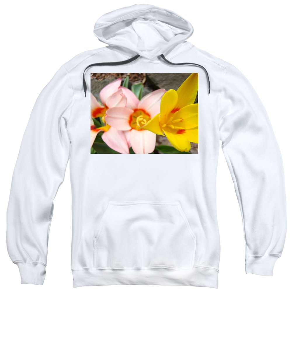 Tulip Sweatshirt featuring the photograph Yellow Tulips Art Prints Pink Tulips Spring Florals Baslee Troutman by Baslee Troutman