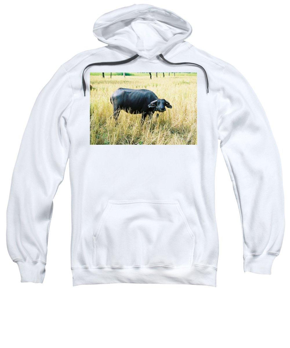 Water Buffalo Sweatshirt featuring the photograph You Lookin At Me by Mary Rogers