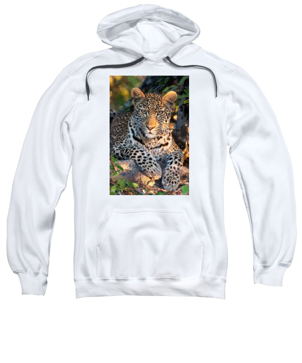 Leopard Sweatshirt featuring the photograph Young Leopard by Mike Dodak