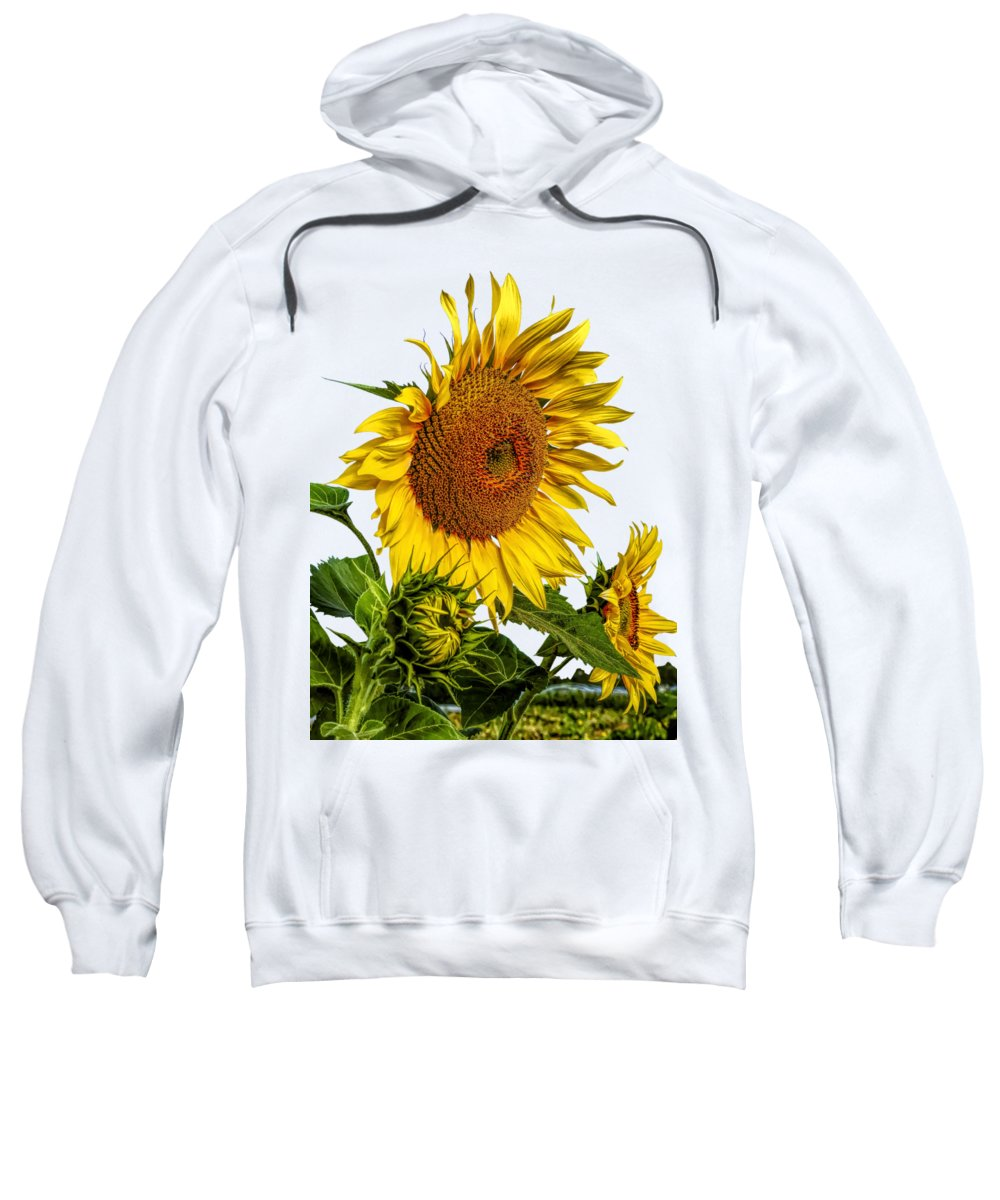 Sunflower Seeds Photographs Hooded Sweatshirts T-Shirts