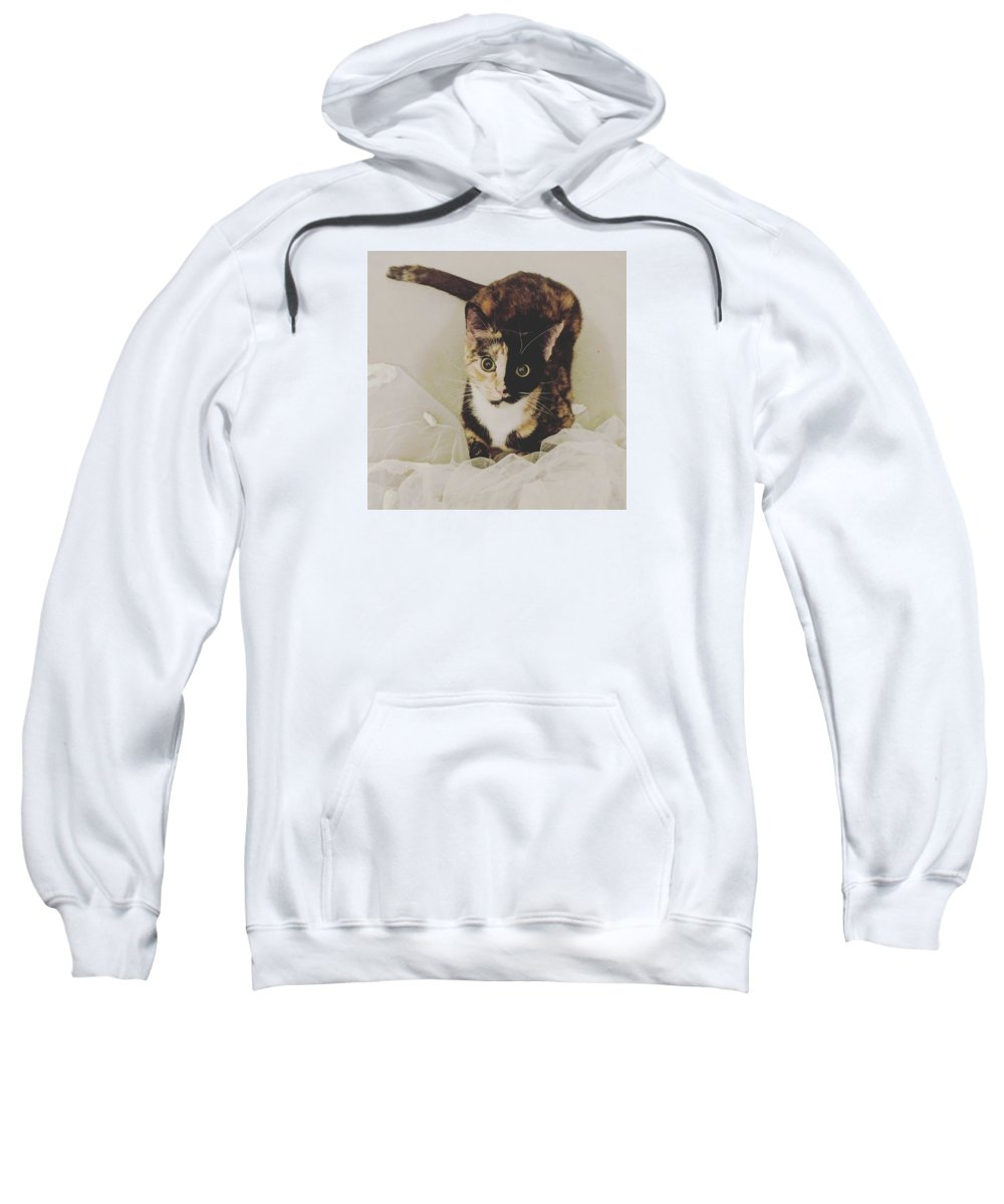 Cute Cat Sweatshirt featuring the photograph Meet Star by Star And Ray