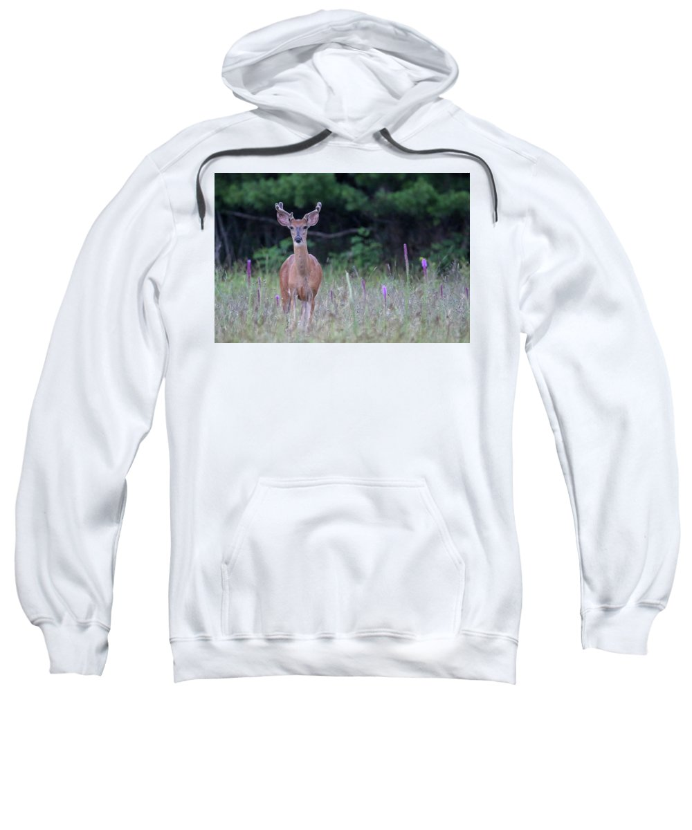 Buck Sweatshirt featuring the photograph Summer Young Buck 1 by Brook Burling