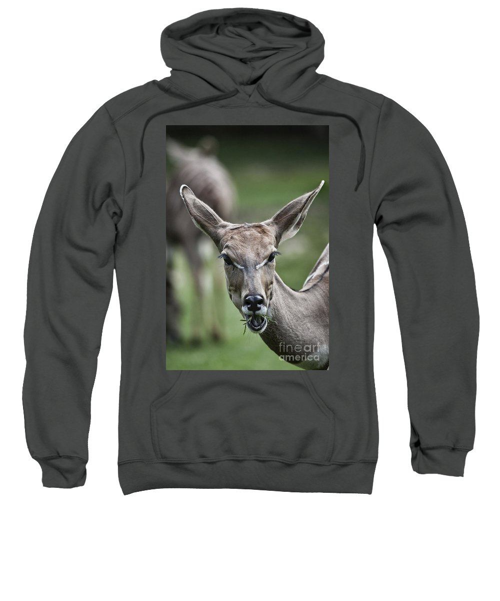 Lesser Kudus Sweatshirt featuring the photograph I Am All Ears by Douglas Barnard