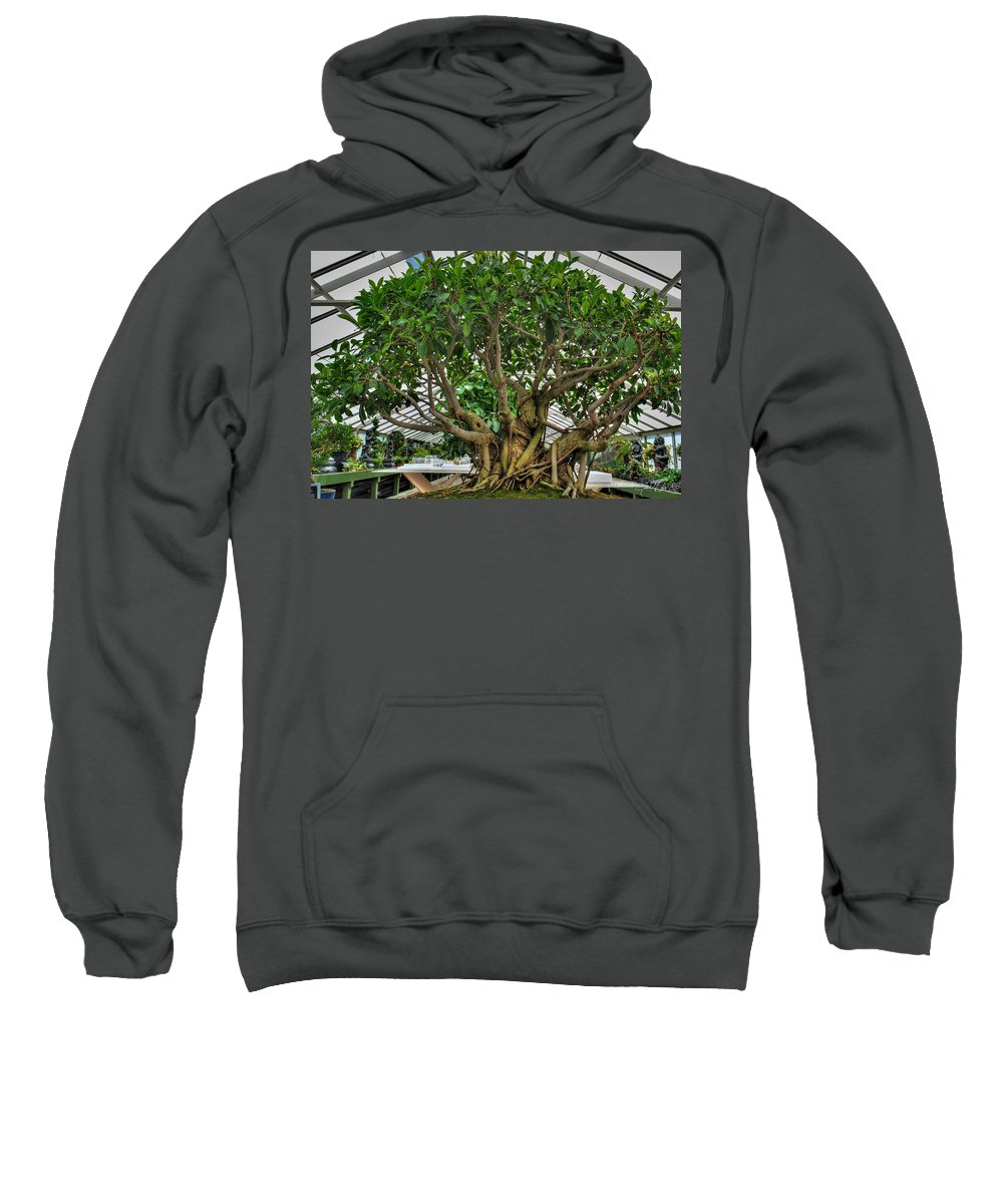Buffalo Botanical Gardens Sweatshirt featuring the photograph 001 Bonsai Summer Show Buffalo Botanical Gardens Series by Michael Frank Jr