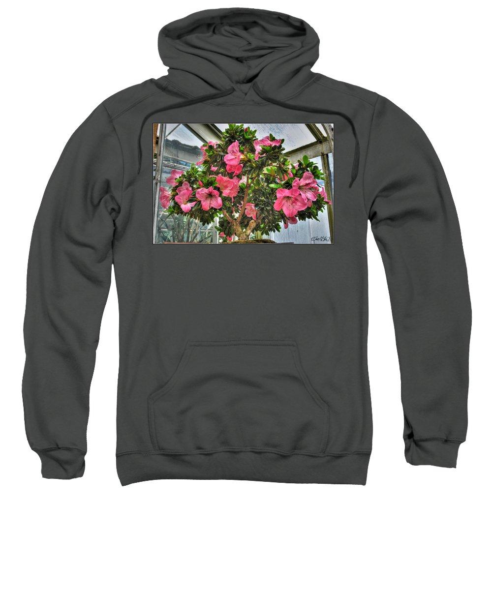 Buffalo Botanical Gardens Sweatshirt featuring the photograph 002 Bonsai Summer Show Buffalo Botanical Gardens Series by Michael Frank Jr