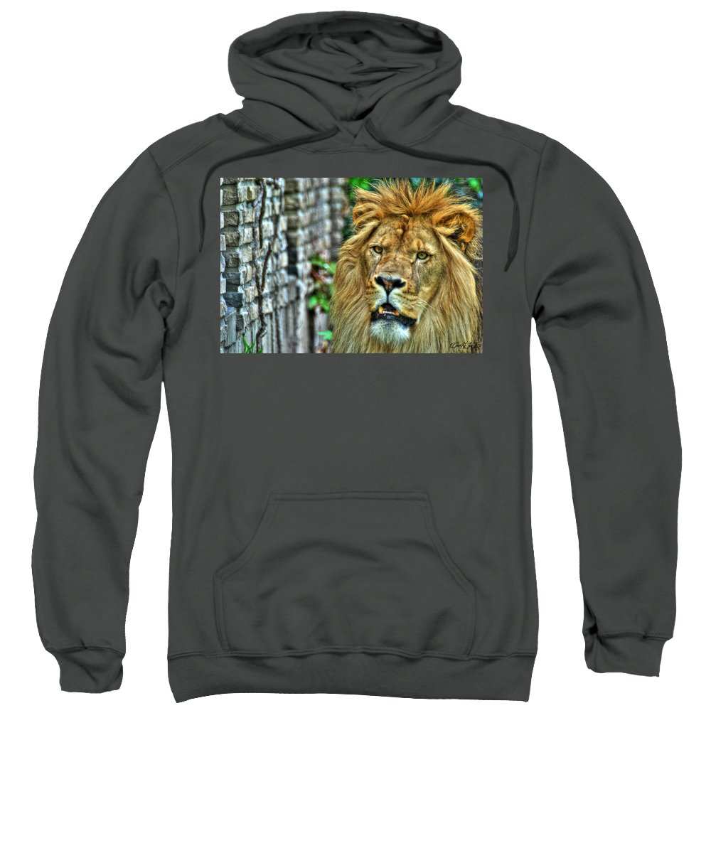 Lion Sweatshirt featuring the photograph 008 Lazy Boy At The Buffalo Zoo by Michael Frank Jr