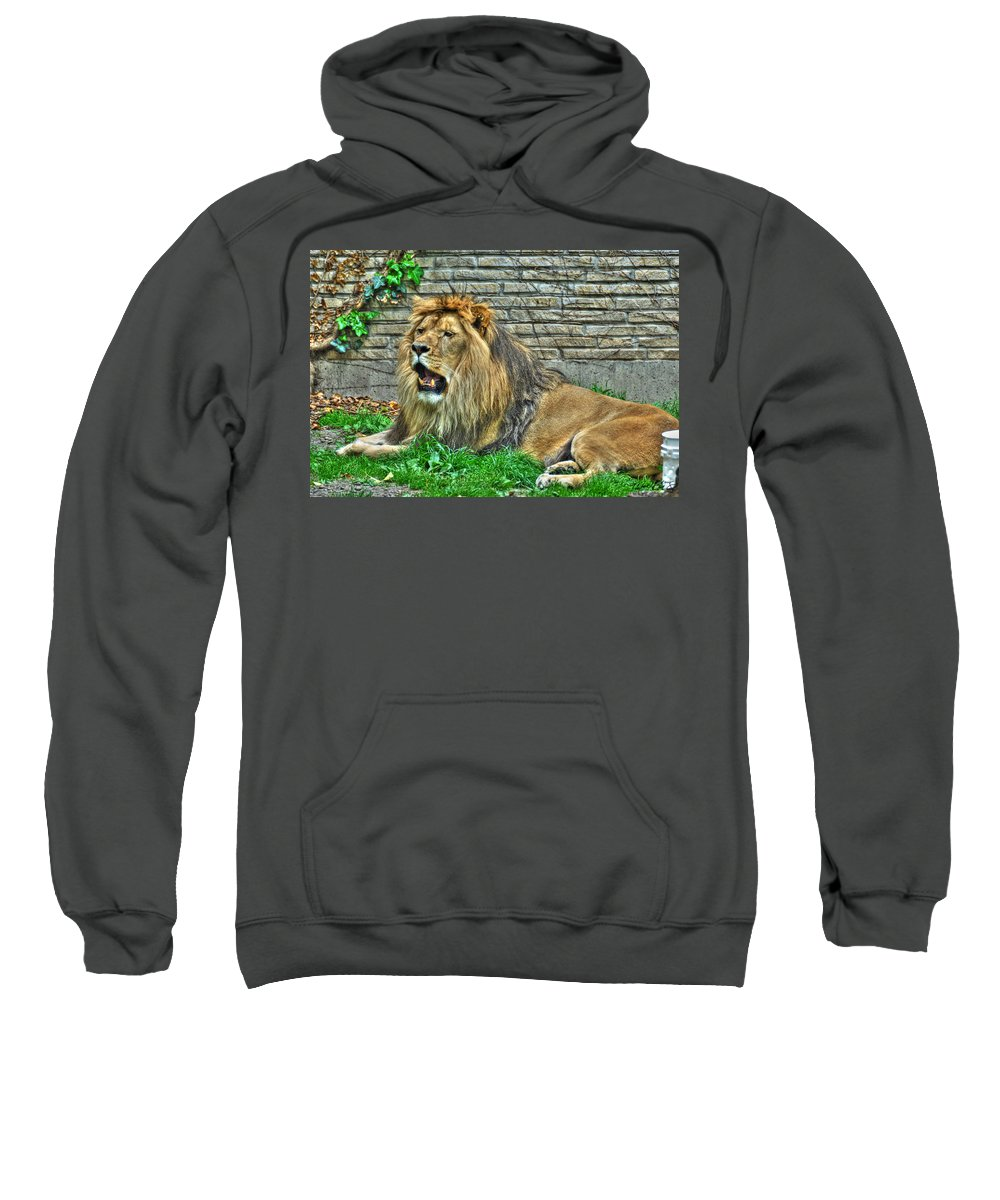 Lion Sweatshirt featuring the photograph 009 Lazy Boy At The Buffalo Zoo by Michael Frank Jr