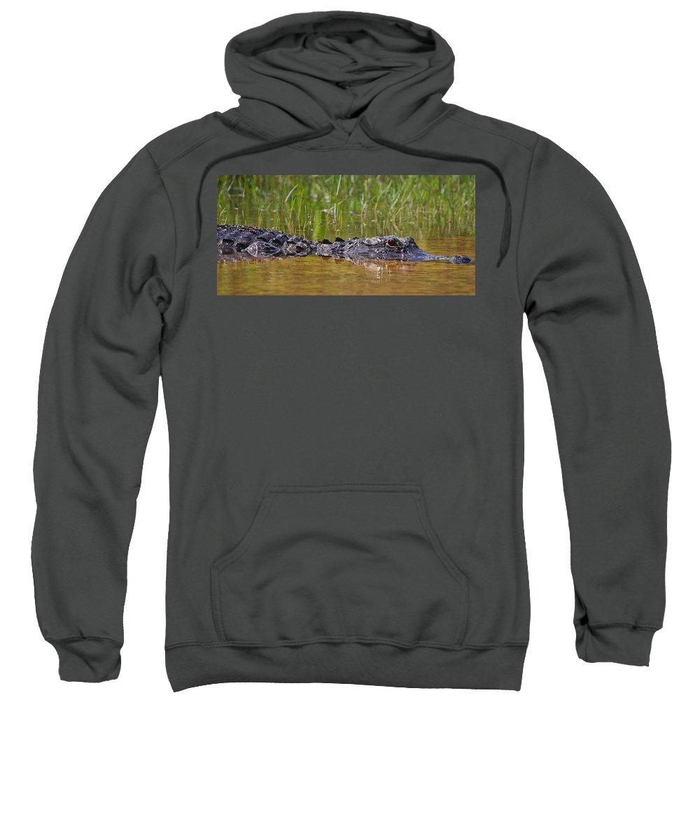 Alligator Sweatshirt featuring the photograph Alligator by Dennis Goodman