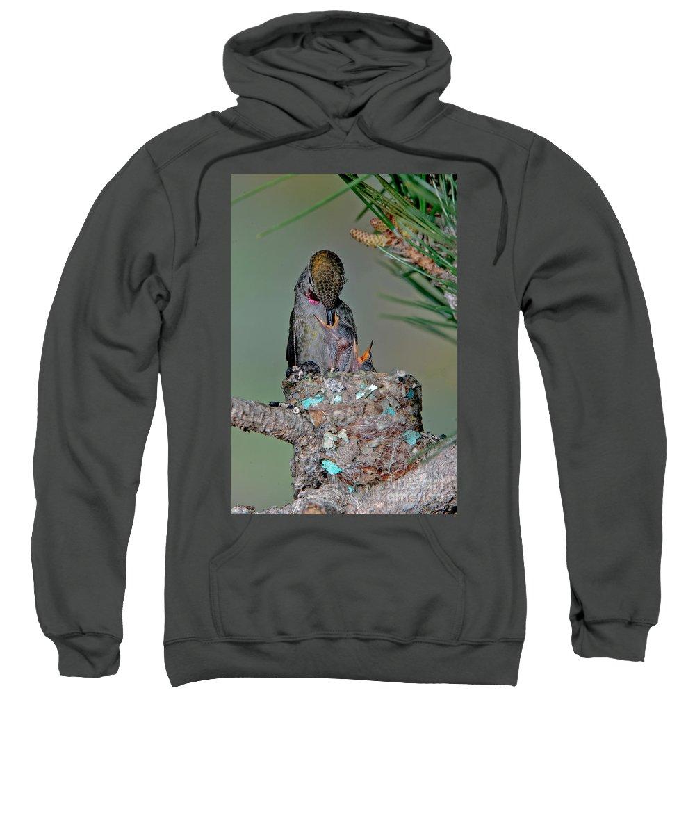 Vertical Sweatshirt featuring the photograph Annas Hummingbird Feeding Young by Anthony Mercieca