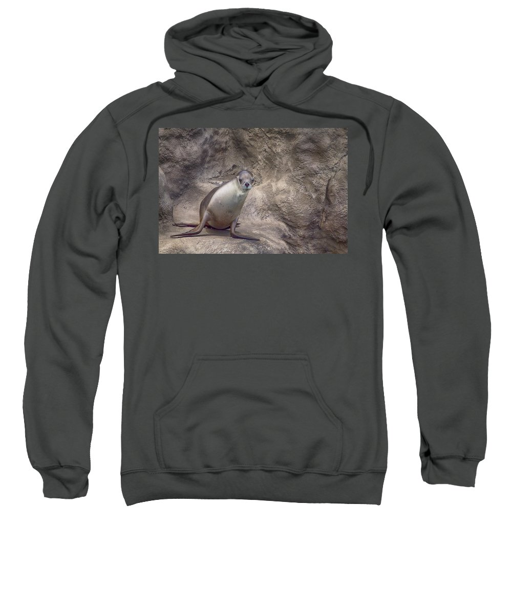 Sea Lion Sweatshirt featuring the photograph Center Of Attraction by Douglas Barnard
