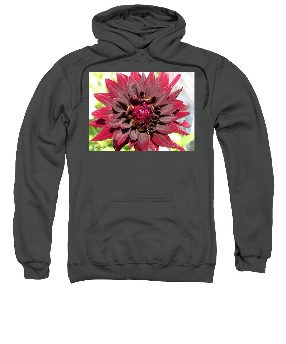 Dahlia Sweatshirt featuring the photograph Dahlia Named Black Wizard by J McCombie
