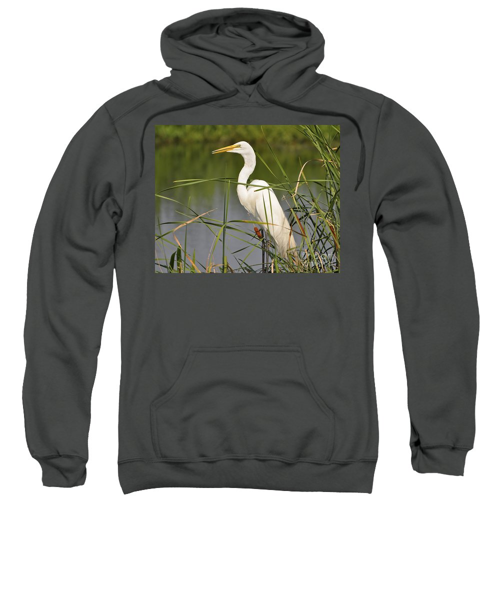 Egret Sweatshirt featuring the photograph Egret In The Cattails by Al Powell Photography USA