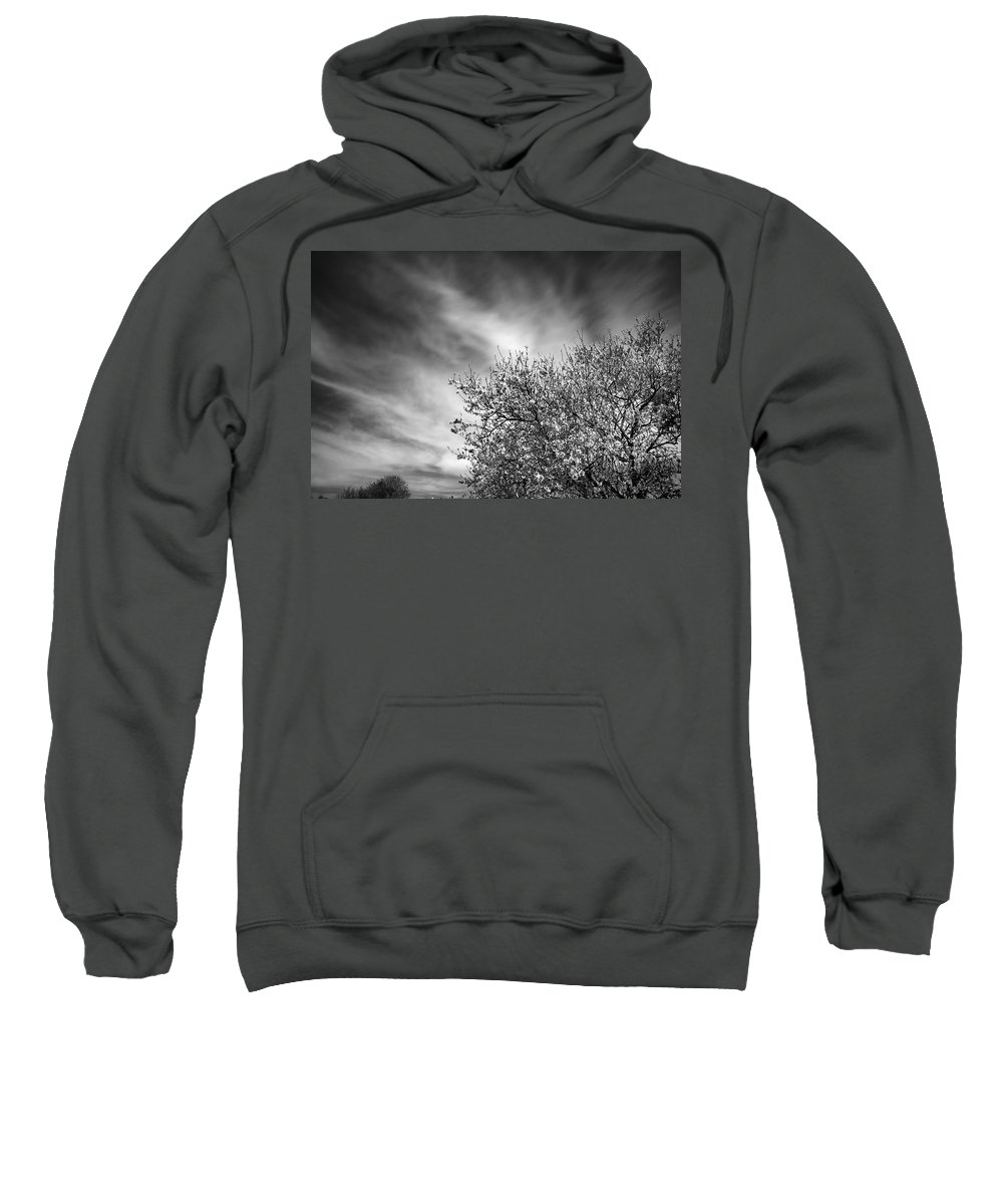Black And White Sweatshirt featuring the photograph Flowering Almond by Guido Montanes Castillo
