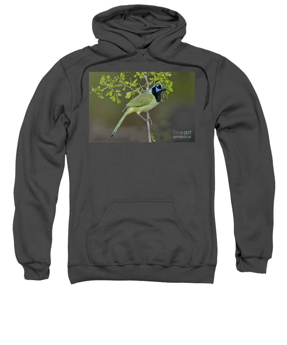 Green Jay Sweatshirt featuring the photograph Green Jay by Anthony Mercieca