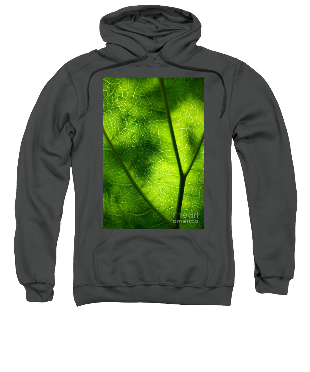 Rhubarb Sweatshirt featuring the photograph Green Leaf by Kati Finell