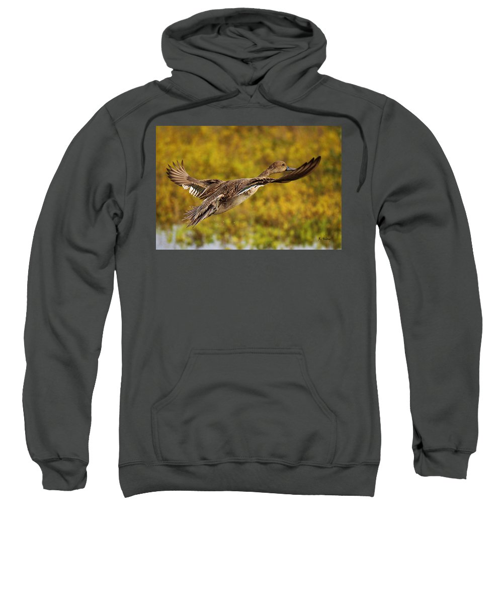Roena King Sweatshirt featuring the photograph Hen Northern Pintail In Flight by Roena King
