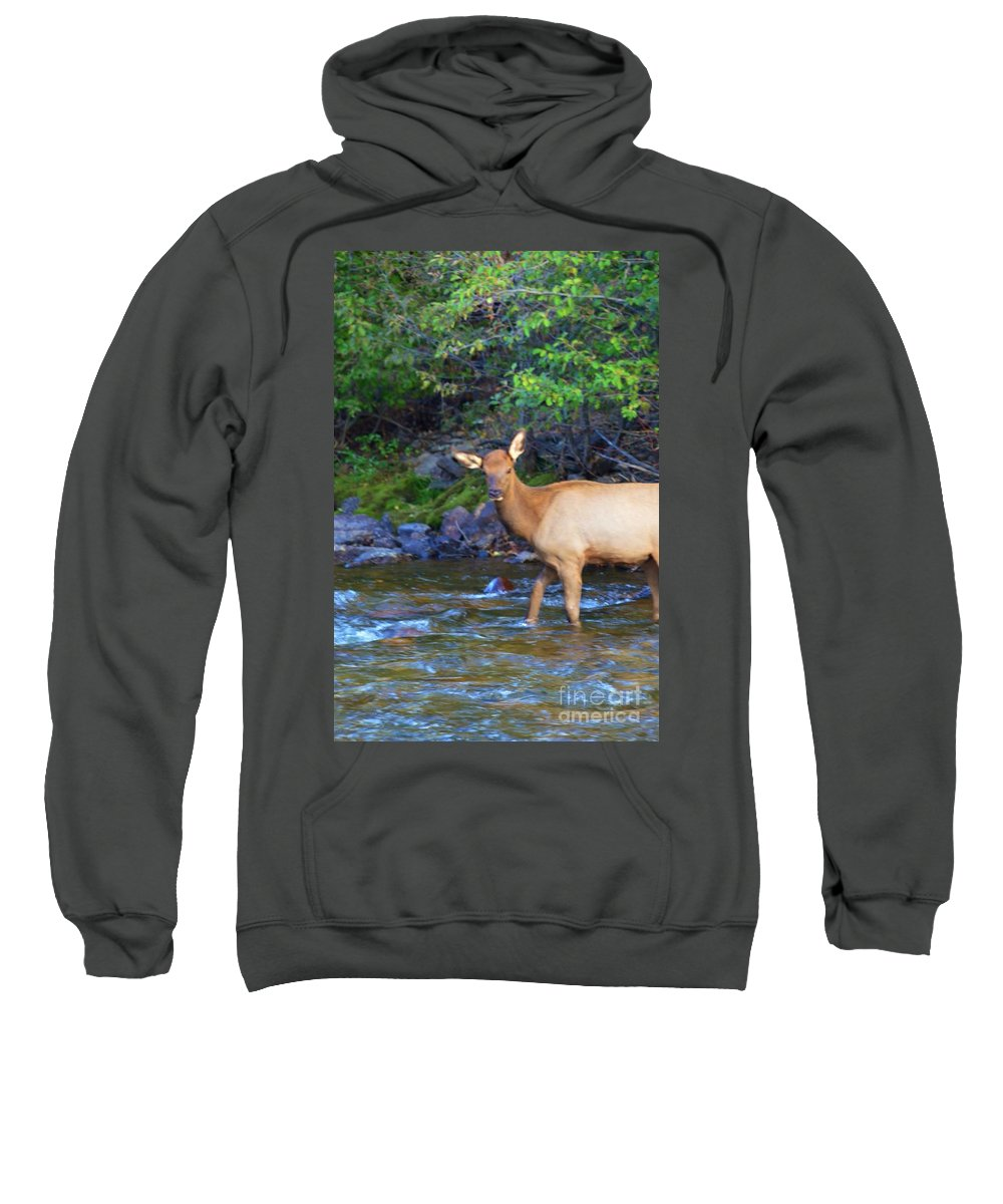 Elk Sweatshirt featuring the photograph I Am So Cute by Kathleen Struckle