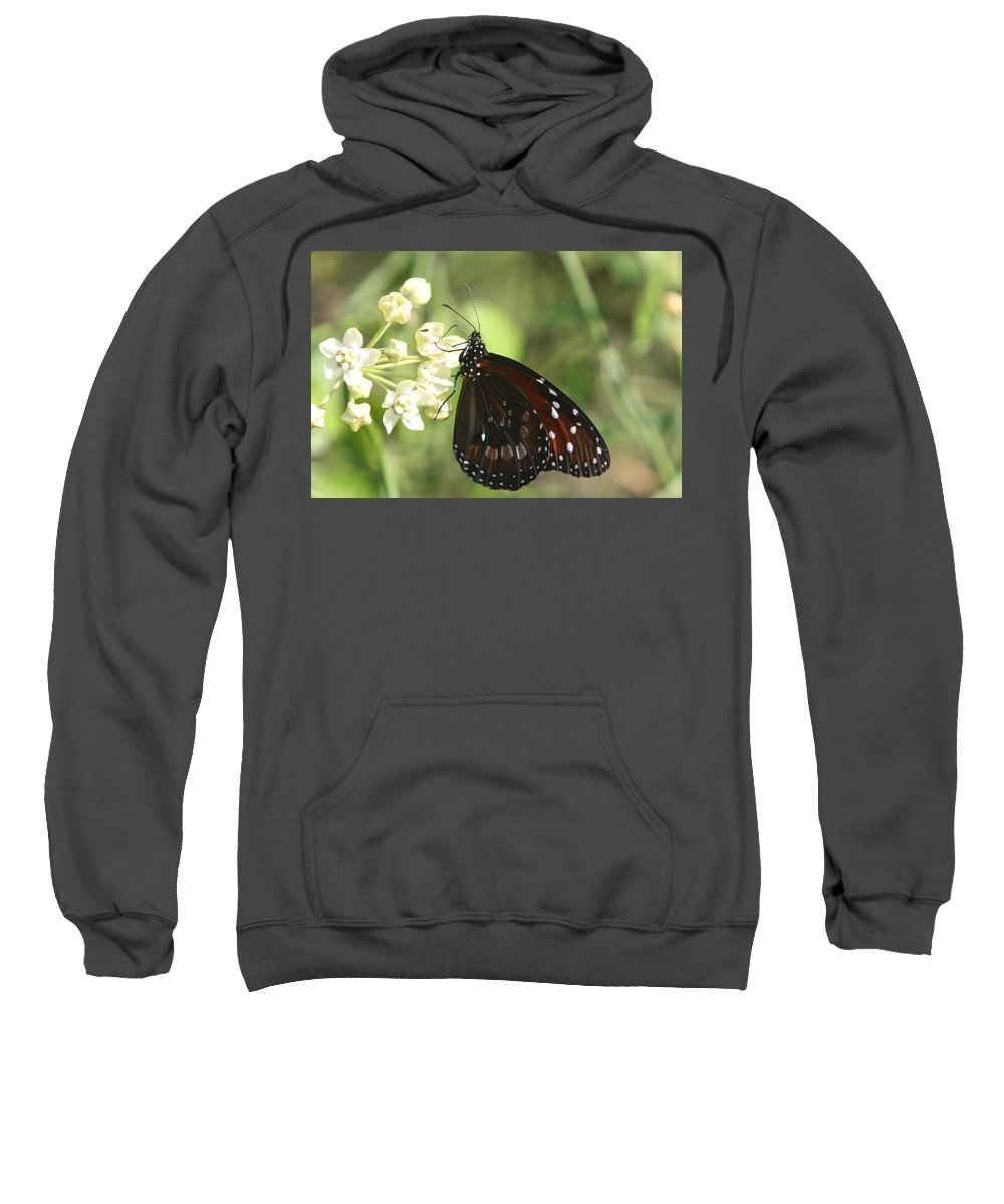 Butterfly Sweatshirt featuring the photograph Monarch Butterfly by Christiane Schulze Art And Photography