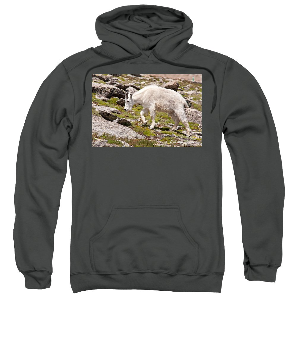 Arapaho National Forest Sweatshirt featuring the photograph Mountain Goat On Mount Evans by Fred Stearns