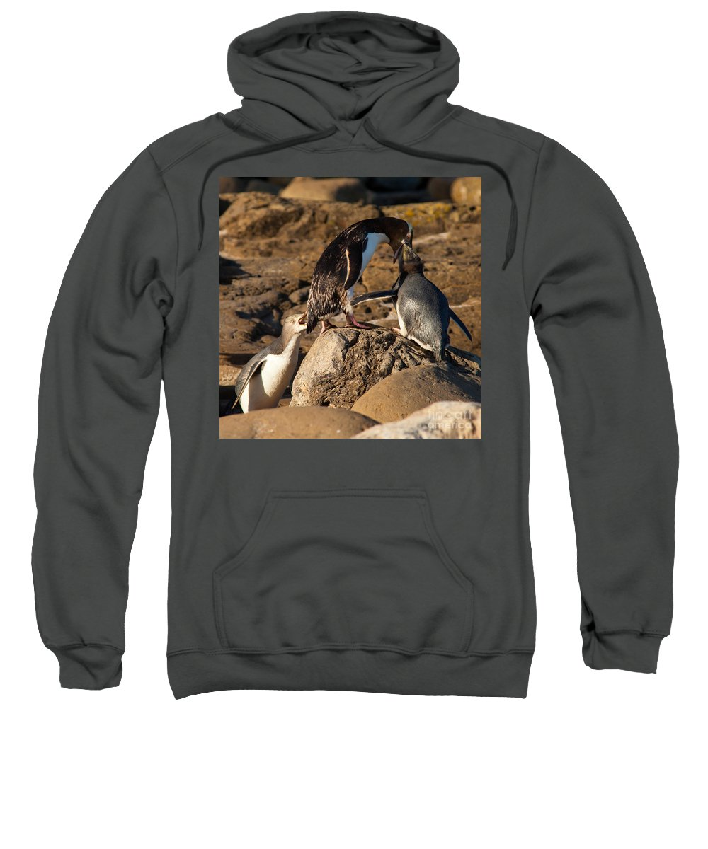 South Island Sweatshirt featuring the photograph Nz Yellow-eyed Penguins Or Hoiho Feeding The Young by Stephan Pietzko