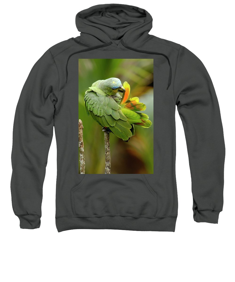 00217468 Sweatshirt featuring the photograph Orange-winged Parrot Amazona Amazonica by Pete Oxford