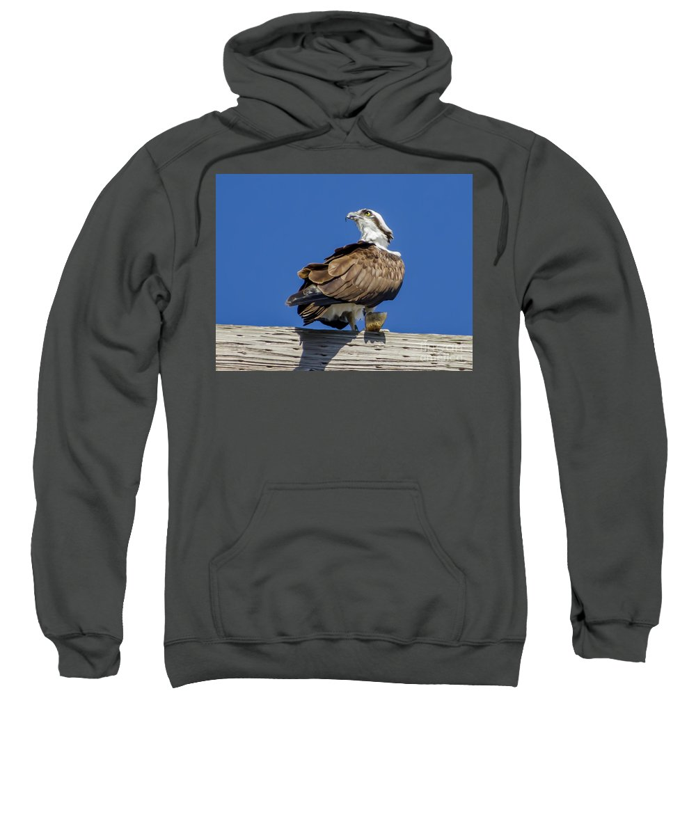 Osprey With Fish In Talons Sweatshirt featuring the photograph Osprey With Fish In Talons by Dale Powell