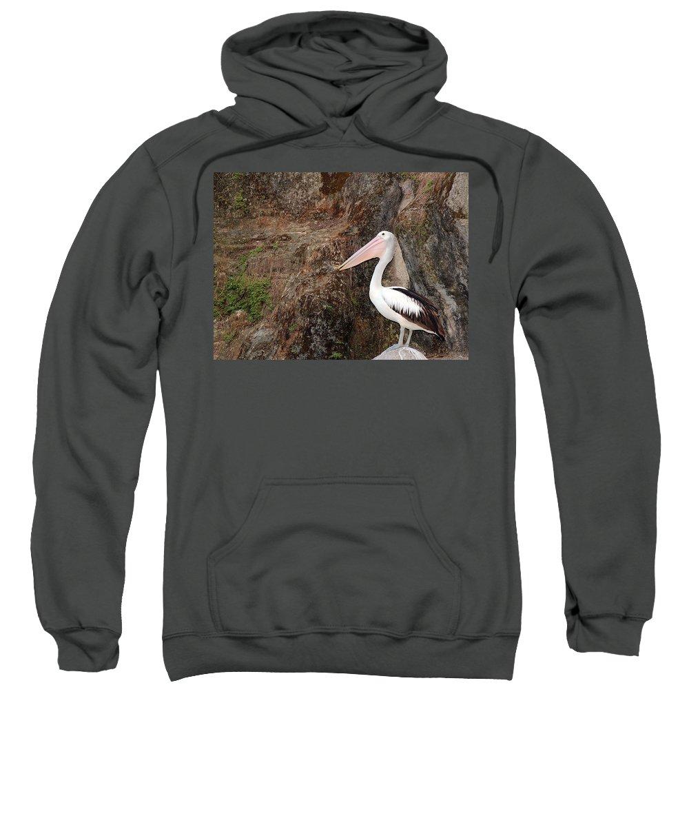 Pelican Sweatshirt featuring the photograph Portrait Of An Australian Pelican by Paul Fell