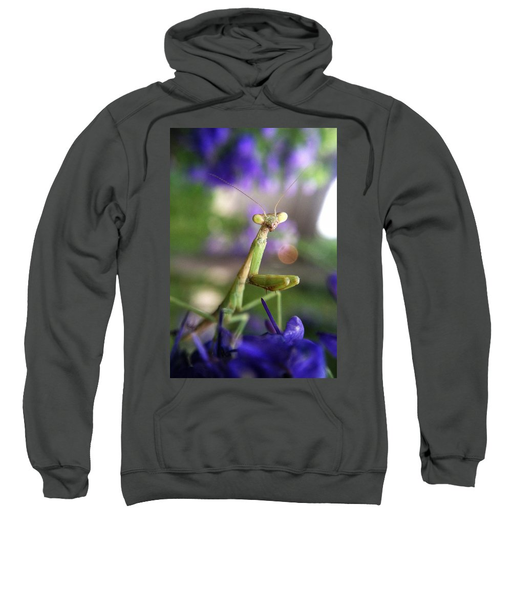 Praying Mantis Sweatshirt featuring the photograph Praying Mantis by Stacy Egnor