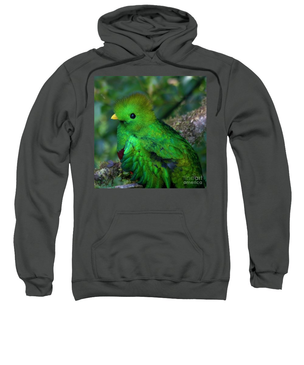 Bird Sweatshirt featuring the photograph Quetzal by Heiko Koehrer-Wagner