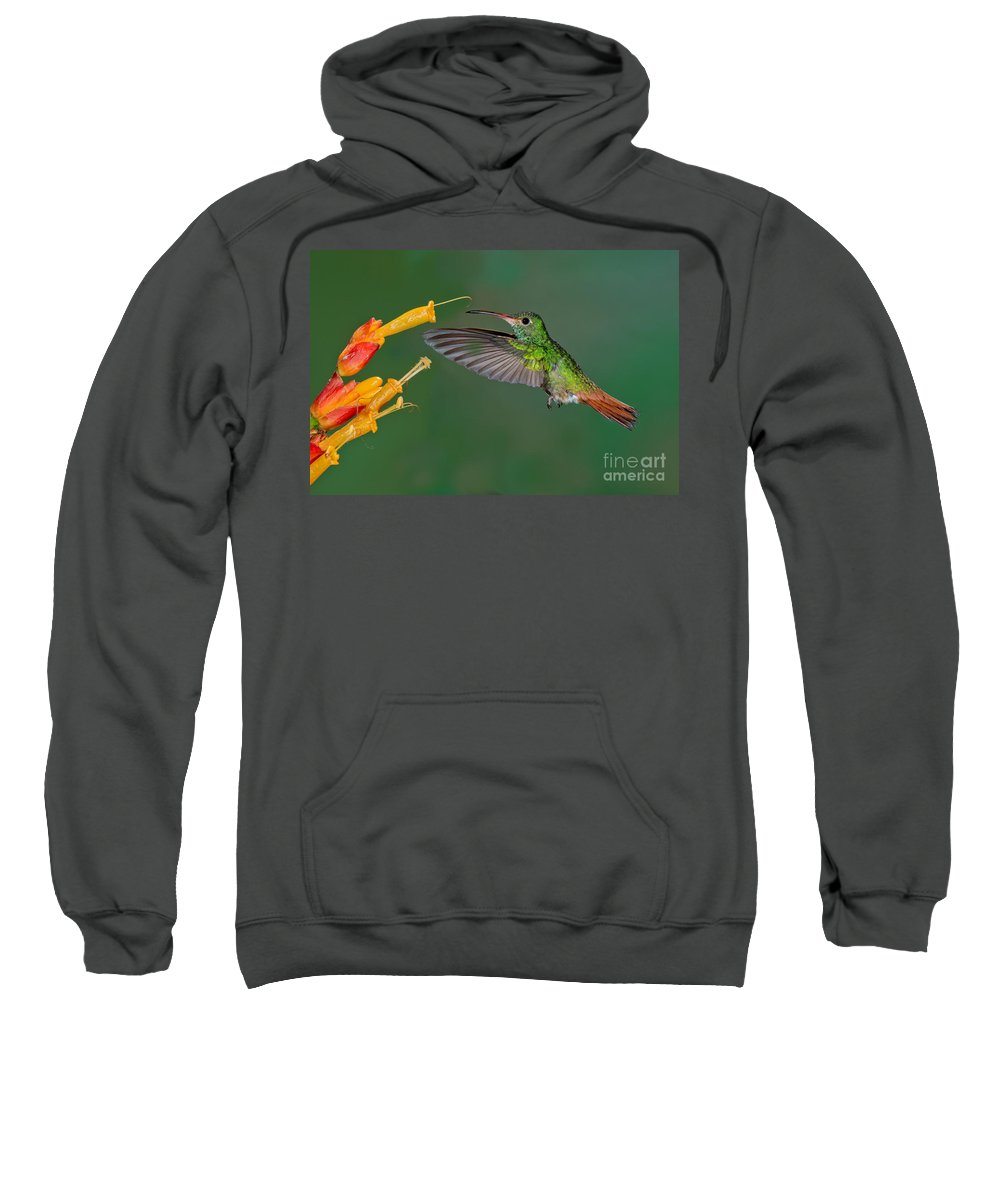 Rufous-tailed Hummingbird Sweatshirt featuring the photograph Rufous-tailed Hummer by Anthony Mercieca