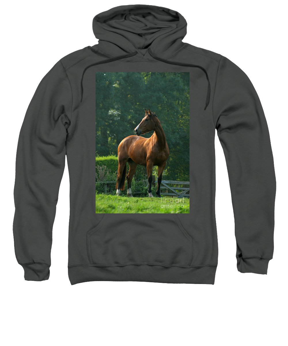 Horse Sweatshirt featuring the photograph Sentinel by Angel Ciesniarska