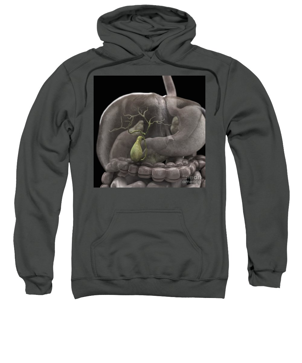 Esophagus Sweatshirt featuring the photograph The Gallbladder by Science Picture Co