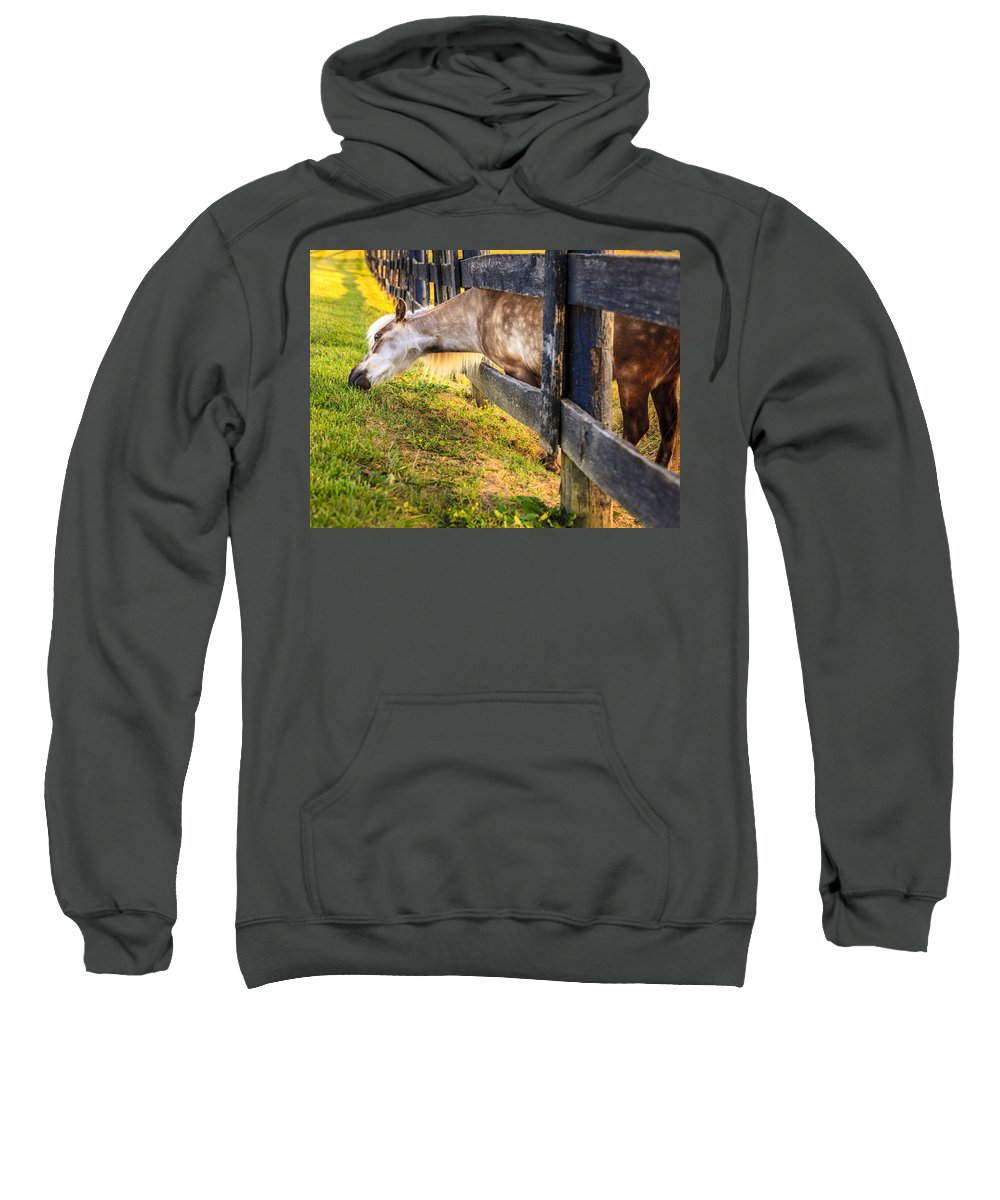 Bluegrass Sweatshirt featuring the photograph The Grass Is Greener... by Alexey Stiop